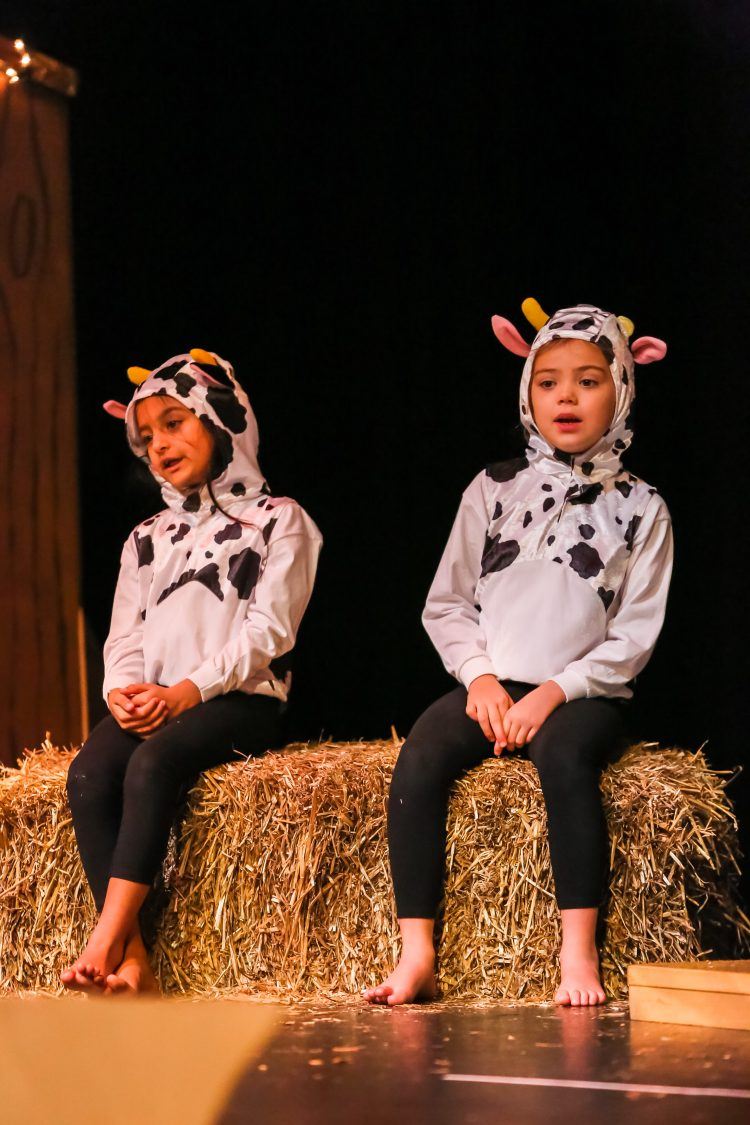 Two pupils dressed as cows perform at the Westholme Nursery and Infant school nativity play